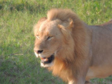 overkill the race to save africa s wildlife books a race to save the last lions