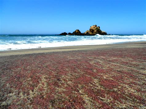sand beaches pfeiffer purple sand beach california holidayspots4u