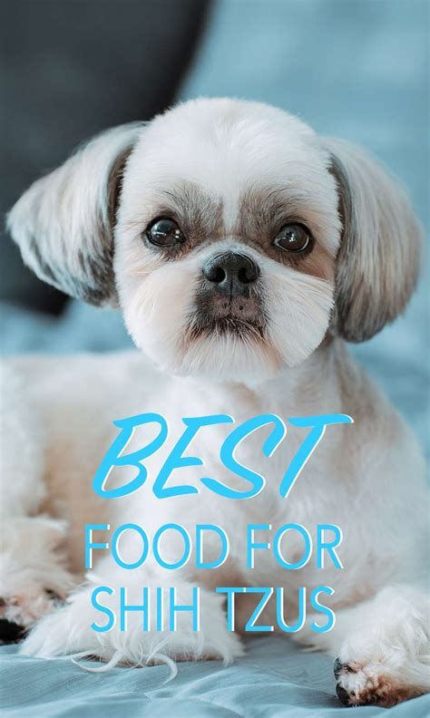 recommended food for shih tzu best food for shih tzu puppies to adults and seniors