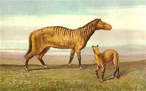 how is a dogs period palaeos cenozoic the neogene period