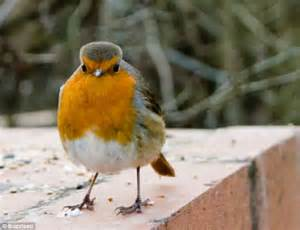 real life angry birds feathered creatures that look