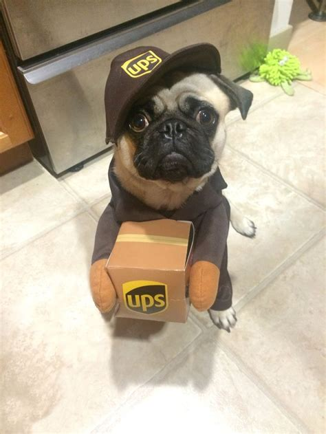 pug delivery 32 best ups images on united parcel service cargo airlines and airplanes