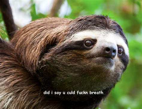 Sloths Memes - the sloth meme thread off topic comic vine