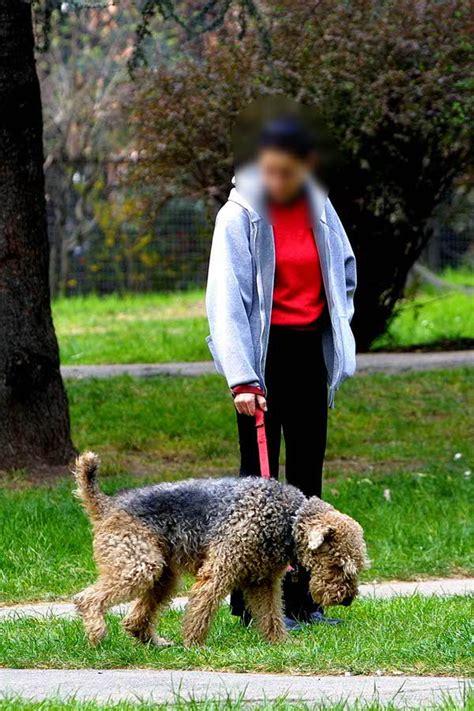 scuola ufficio seriate padroni dei cani a seriate il comune li manda a scuola