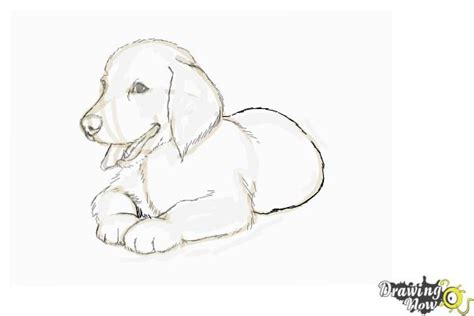 drawings of golden retrievers how to draw a golden retriever puppy drawingnow