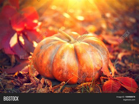 pumpkin background autumn pumpkin thanksgiving day background