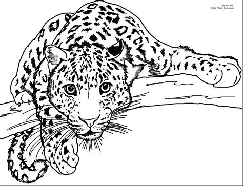 coloring page cheetah cheetah coloring page pencil and in color