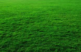 grass background images free stock photos download 11 539 free stock photos commercial
