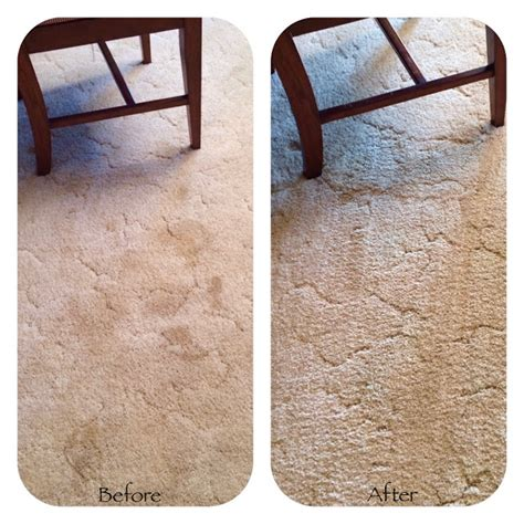 How Do You Remove Pet Stains From Carpet Remove Pet Stains From Carpet For Good By Making This
