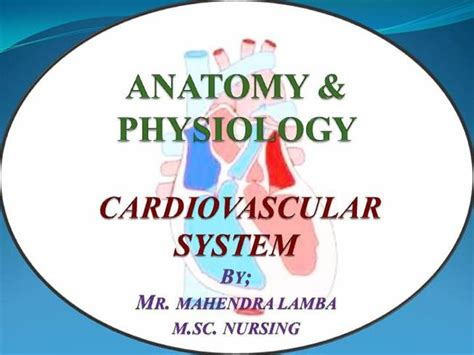 Cardiovascular System Ppt Authorstream Circulatory System Powerpoint