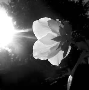 black white 40 stunning black and white photography