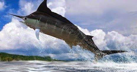 Joran Air Laut 3 alternatif umpan jitu mancing ikan air laut