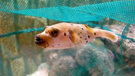 puppy fish 1000 images about aminals on