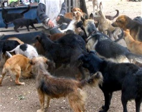perros cojiendo pelicula perros cojiendo pelicula como perros y gatos