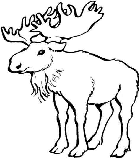 coloring book pages moose 16 moose coloring pages print color craft