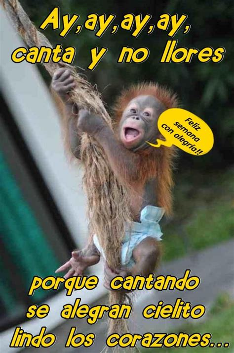 imagenes de buenos dias familia chistosa feliz semana changos monkey 1 pinterest