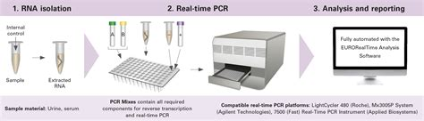 pcr test eurorealtime zika virus the real time pcr test from