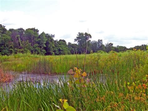 the way to cattail pond books cattails beside pond free stock photos in jpeg jpg