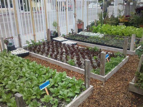 Backyard Garden Ideas Vegetable Conroe Feeders Supply Inc