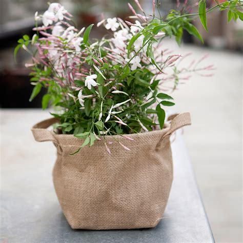 Burlap Bag Planter by Burlap Tote Planter Terrain