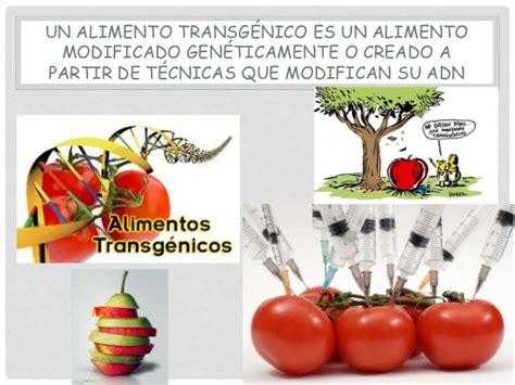 alimentos transgenicos alimentos transgenicos