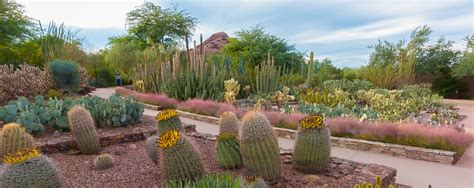 Desert Botanical Garden Coupon Desert Botanical Gardens Coupon Best Idea Garden