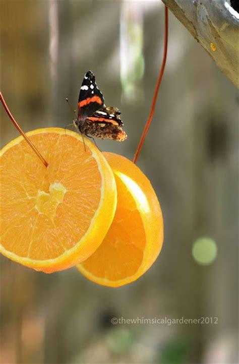 17 best ideas about baltimore orioles birds on pinterest