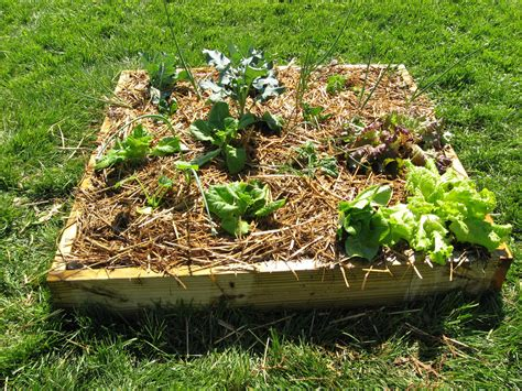 11 Pictures To Start Vegetable Gardening In Small Spaces Starting A Small Vegetable Garden