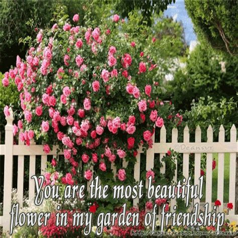 you are the most beautiful flower in my garden of