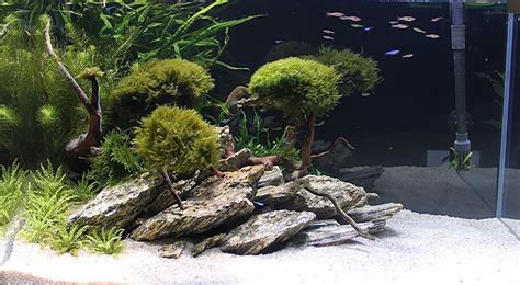 aquascaping stones 5 kg natural wood stone for an aquarium aquascaping