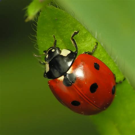 ladybugs in my bathroom attracting good bugs to your garden how to build a house