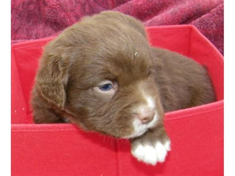 spca puppies for adoption spca puppies available for adoption next week patch