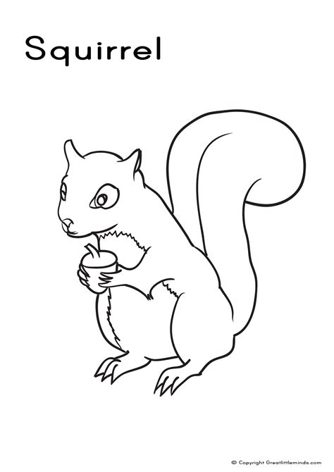 coloring page of a gray squirrel squirrel free colouring pages