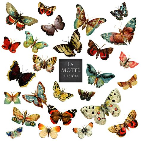 butterfly clipart butterfly scrap clipart vintage butterflies