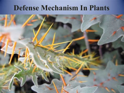 Planting Flowers In Planters by Defense Mechanism In Plants