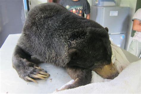 Pulpen Beruang mati mongabay co id