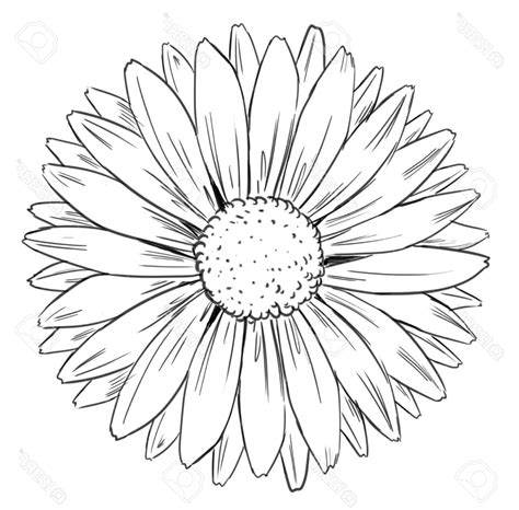 Sunflower Clip Outline by Outline Drawing Of A Sunflower Drawing Sketch Picture