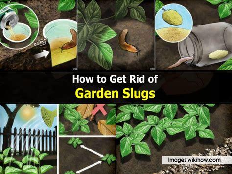 how to get rid of garden slugs