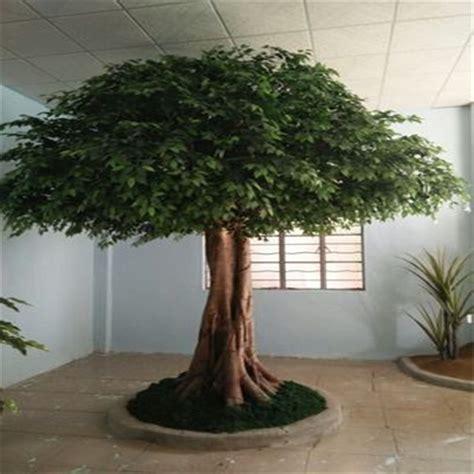 Bonsai Ficus Kaufen by Outdoor Artificial Big Ficus Bonsai Tree Buy Ficus