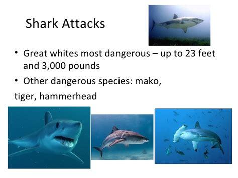 Sharks Powerpoint Shark Powerpoint