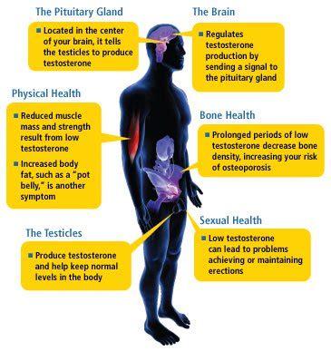 crossdresser signs symptoms in men herbal health what are the signs symptoms of low testosterone in men