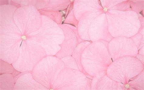 imagenes fondo de pantalla rosa p 233 talos de color rosa fondos de pantalla p 233 talos de