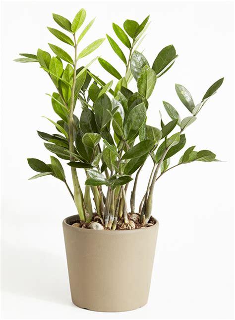 Plante Sans Entretien by Plante Sans Entretien Maison Design Apsip