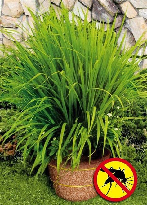 Mosquito Proof Backyard 1000 Ideas About Snake Repellant On Pinterest Keep