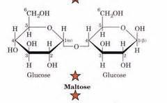 carbohydrates quizlet biochemistry biochemistry ch 8 carbohydrates flashcards quizlet