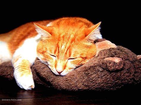 chat wallpaper images fond d 233 cran de chat beau chat roux