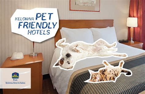 friendly hotels pet friendly kelowna hotel s ultimate guide hotel rooms suites in kelowna bc