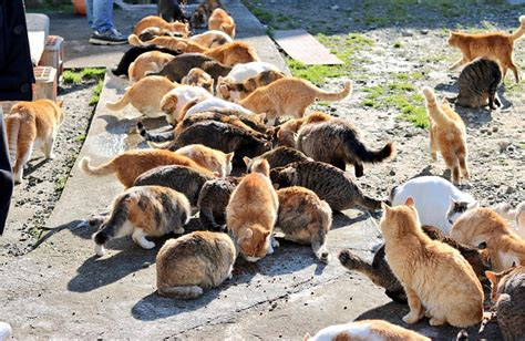 cat island japan s cat island asks internet for food gets more than