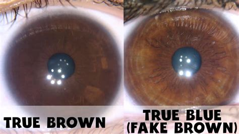 how to change your eye color to light brown naturally eye color change on food diet brown vs true
