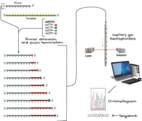 illumina sequencing protocol using dna sequencing in your genes in space